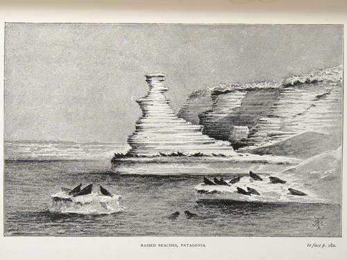 Image of Darwin-F64-1890-zzzz-det-182-f4r