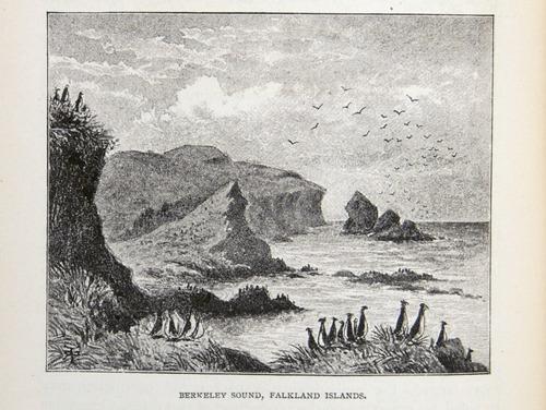Image of Darwin-F64-1890-zzzz-det-214