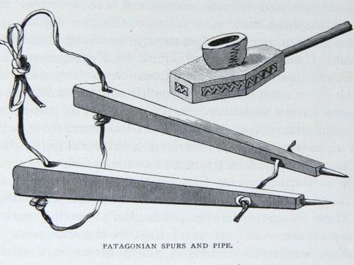 Image of Darwin-F64-1890-zzzz-det-249