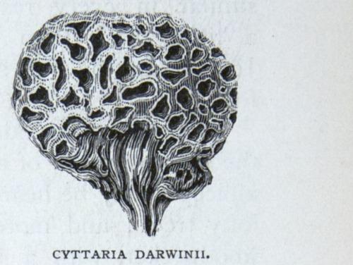 Image of Darwin-F64-1890-zzzz-det-251