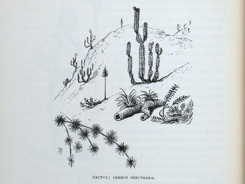 Image of Darwin-F64-1890-zzzz-det-278