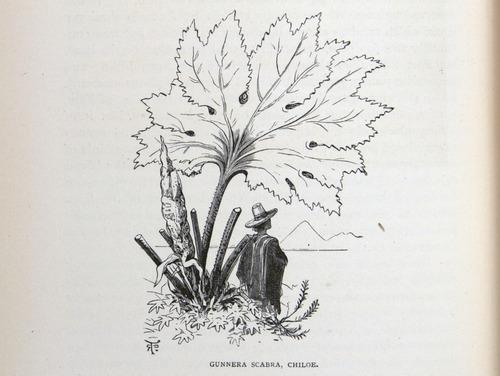 Image of Darwin-F64-1890-zzzz-det-310