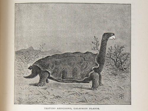 Image of Darwin-F64-1890-zzzz-det-397