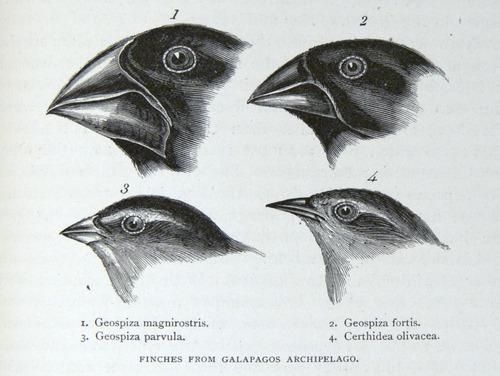 Image of Darwin-F64-1890-zzzz-det-405