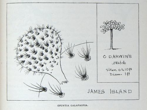 Image of Darwin-F64-1890-zzzz-det-427