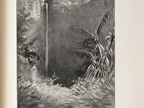Image of Darwin-F64-1890-zzzz-det-436-f9