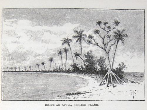 Image of Darwin-F64-1890-zzzz-det-481