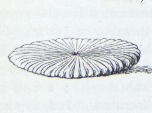 Image of Darwin-F64-1890-zzzz-det-507