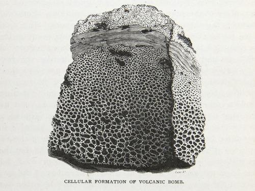 Image of Darwin-F64-1890-zzzz-det-524