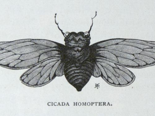 Image of Darwin-F64-1890-zzzz-det-529