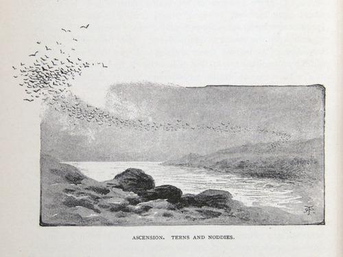 Image of Darwin-F64-1890-zzzz-det-538