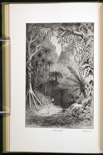 Image of Darwin-F64-1890-024-f1v