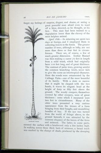 Image of Darwin-F64-1890-026