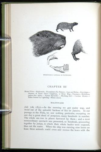 Image of Darwin-F64-1890-040