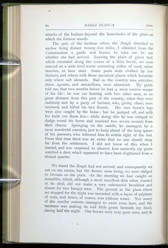Image of Darwin-F64-1890-080