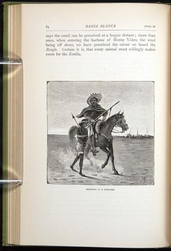 Image of Darwin-F64-1890-084