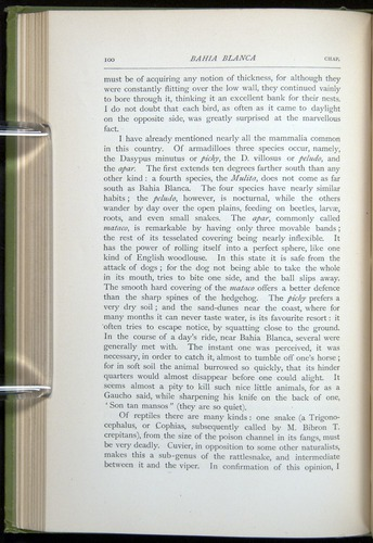 Image of Darwin-F64-1890-100