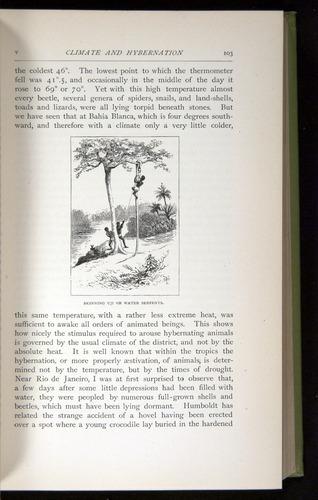 Image of Darwin-F64-1890-103