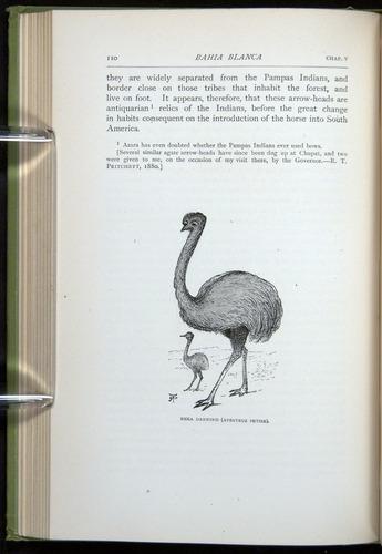Image of Darwin-F64-1890-110