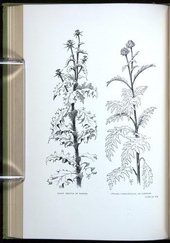 Image of Darwin-F64-1890-124-f3v