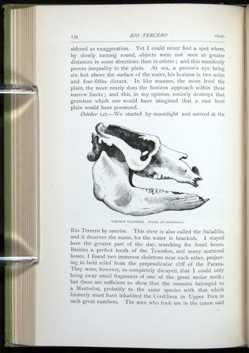 Image of Darwin-F64-1890-134