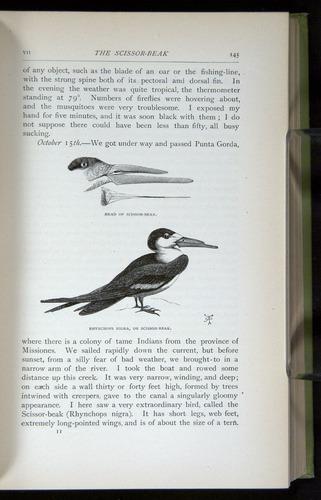 Image of Darwin-F64-1890-145