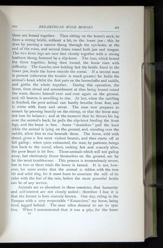 Image of Darwin-F64-1890-161