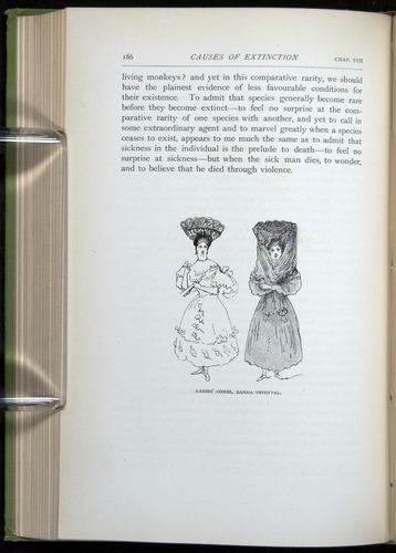 Image of Darwin-F64-1890-186