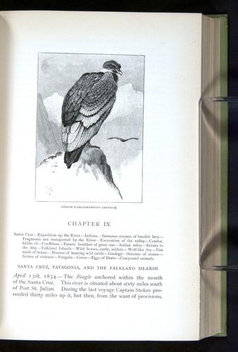 Image of Darwin-F64-1890-187