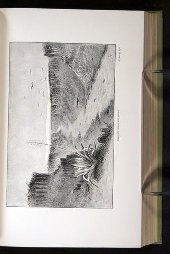 Image of Darwin-F64-1890-192-f5
