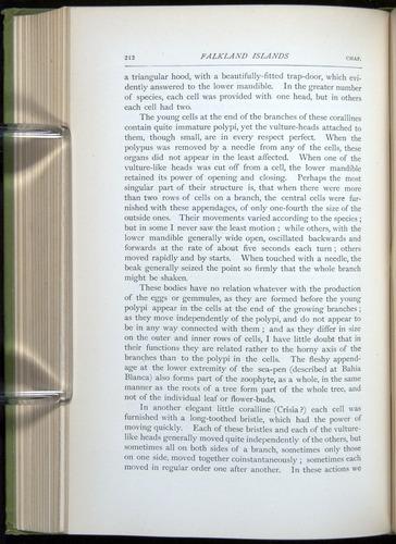 Image of Darwin-F64-1890-212