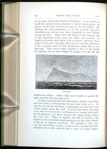 Image of Darwin-F64-1890-222