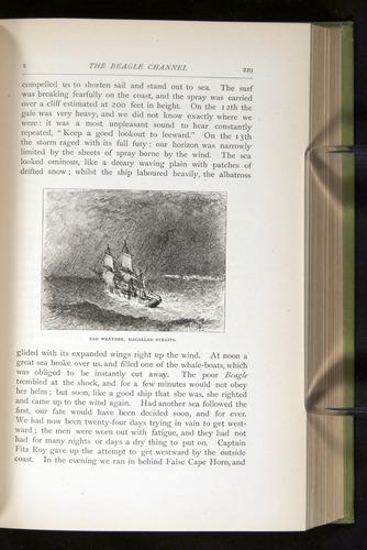 Image of Darwin-F64-1890-229