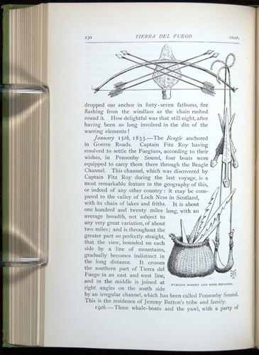 Image of Darwin-F64-1890-230
