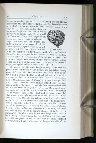Image of Darwin-F64-1890-251