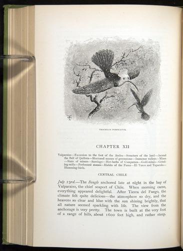 Image of Darwin-F64-1890-268