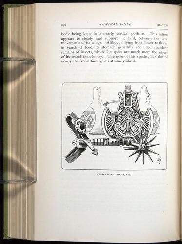 Image of Darwin-F64-1890-290