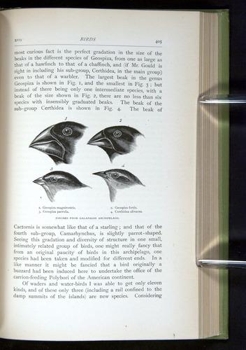 Image of Darwin-F64-1890-405