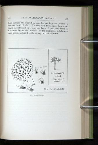 Image of Darwin-F64-1890-427