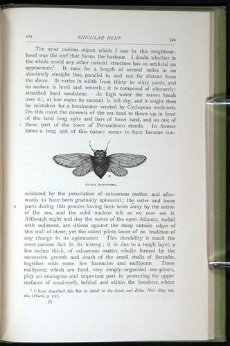 Image of Darwin-F64-1890-529