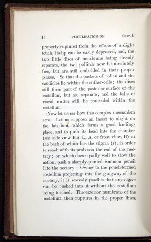 Image of Darwin-F800-1862-00014