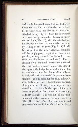 Image of Darwin-F800-1862-00016