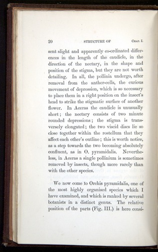 Image of Darwin-F800-1862-00020