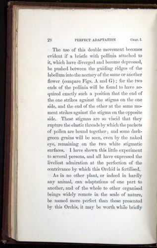 Image of Darwin-F800-1862-00028