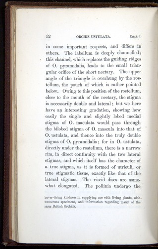 Image of Darwin-F800-1862-00032