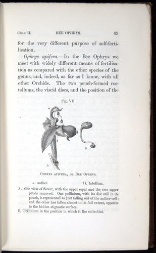 Image of Darwin-F800-1862-00063