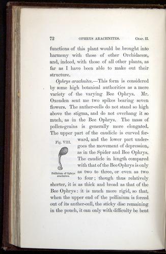 Image of Darwin-F800-1862-00072