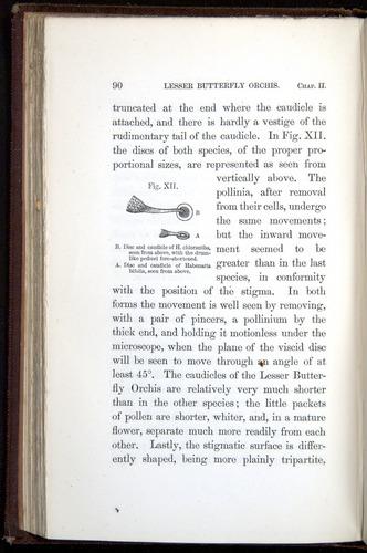 Image of Darwin-F800-1862-00090