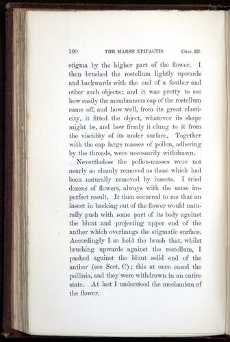 Image of Darwin-F800-1862-00100