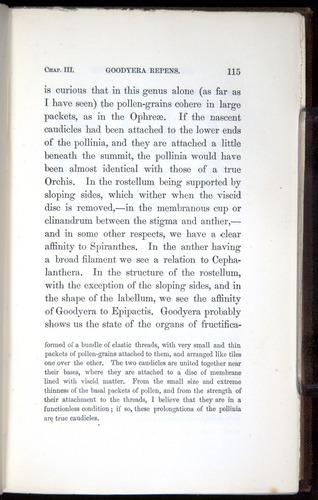 Image of Darwin-F800-1862-00115